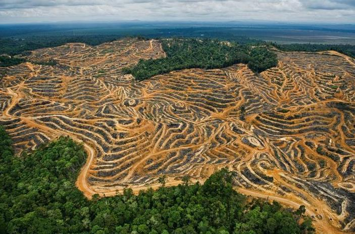 the issues of deforestation in russia brazil and canada